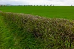 Wolds de Lincolnshire Foto de archivo
