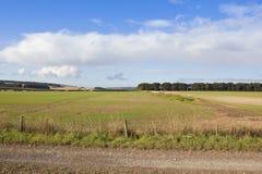 Wolds di Yorkshire che coltivano paesaggio Fotografia Stock