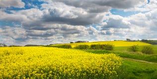 Wolds du Lincolnshire avec le viol de graine oléagineuse Photos stock