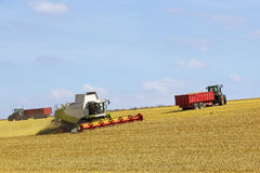 Wolds harvesting 2 Royalty Free Stock Photography