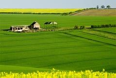 Wolds orientali di Yorkshire Immagine Stock