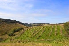 Wolds scenici di Yorkshire Fotografia Stock Libera da Diritti