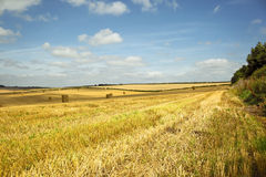 Wolds view Royalty Free Stock Photos