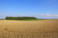 Wolds view and small copse Royalty Free Stock Image