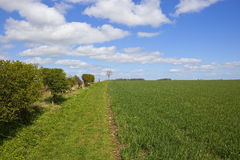 The wolds way long distance footpath in springtime. English springtime landscape with hedgerows and wheat fields by the grassy wolds way long distance footpath Stock Images