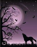 wolf 免版税库存照片