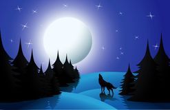 Wolf. Howling on full moon, vector illustration Stock Photography