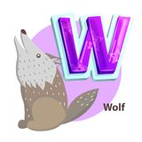 Wolf Animal Children Alphabet Vector Illustration. Wolf animal on children alphabet poster. Letter w and word starting from same character. Wildlife predator vector illustration