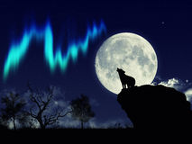 Wolf and aurora. Wallpaper night theme whit howling wolf Stock Photos