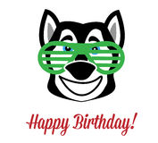 Wolf birthday Royalty Free Stock Photography