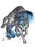 Wolf Stock Images