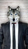Wolf in black suit, business abstract concept Royalty Free Stock Photos
