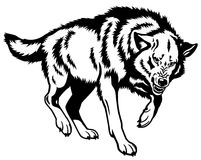 Wolf black white. Wolf,canis lupus,attacking pose,black and white isolated illustration Royalty Free Stock Photography