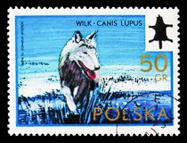 Wolf Canis lupus, International Hunting Committee Congress serie, circa 1973. MOSCOW, RUSSIA - AUGUST 18, 2018: A stamp printed in Poland shows Wolf Canis lupus royalty free stock image