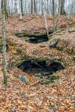 Wolf Cave en Autumn Leaves Royalty-vrije Stock Fotografie