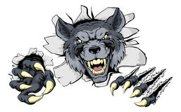 Wolf claws break out. A mean wolf character or sports mascot breaking out Stock Photos