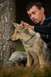 Wolf on a leash with white man taking care of him. Wolf cub on leash with white man taking care of him. Friendship in forest between man and wild animal Stock Image