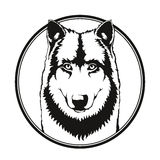 Wolf in de cirkel Royalty-vrije Stock Afbeelding