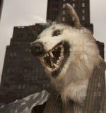 Wolf in der Kleidung der Männer lizenzfreie stockfotos