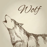 Wolf design. Animal concept.Wildlife animal, vector illustration Royalty Free Stock Images