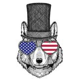 Wolf Dog wearing cylinder top hat Royalty Free Stock Photo