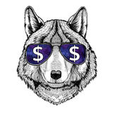 Wolf Dog wearing glasses with dollar sign Illustration with wild animal for t-shirt, tattoo sketch, patch. T-shirt print with wild animal wearing glasses with royalty free illustration