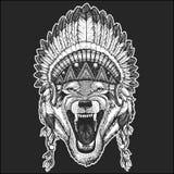 Wolf Dog Wild animal Cool animal wearing native american indian headdress with feathers Boho chic style Hand drawn image. Wolf Dog Wild animal Hand drawn Stock Image