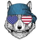 Wolf Dog Wild animal wearing bandana or kerchief Royalty Free Stock Photography