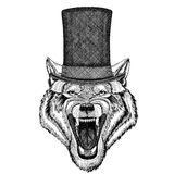 Wolf Dog Wild animal wearing cylinder top hat Stock Photo