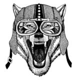 Wolf, dog Wild animal wearing motorcycle, aero helmet. Biker illustration for t-shirt, posters, prints. vector illustration