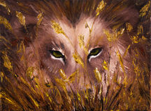 Wolf eyes Stock Photos
