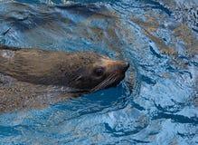 wolf för hav 2 Arkivfoton