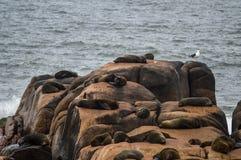 wolf för hav 2 Royaltyfri Foto
