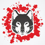 Wolf face Royalty Free Stock Image