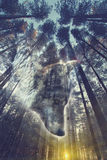 Wolf face and pine forest double exposure. Abstract background stock image