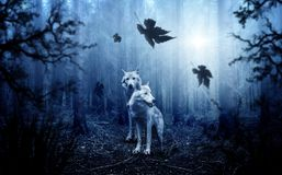 Wolf, Forest, Autumn, Dark Royalty Free Stock Images