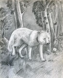 Wolf in the forest - sketch Royalty Free Stock Photos