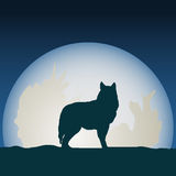 Wolf in front of the moon. Royalty Free Stock Images