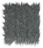 Wolf fur. Texture - close-up Stock Photography