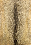 Wolf fur. Texture for background royalty free stock photos