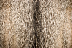 Wolf fur Royalty Free Stock Photography