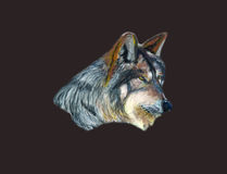 Wolf. Grey animal is painted in soft pastels Royalty Free Stock Photography