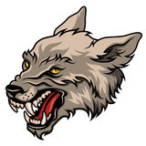 Wolf head. Angry wolf head, colorful  illustration isolated on white Royalty Free Stock Image