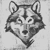 Wolf head hand drawn sketch grunge texture Royalty Free Stock Photography