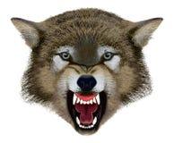 Wolf Head Illustratie vector illustratie