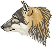 Wolf head profile vector illustration. Wolf head profile, the gray wolf Canis lupus, also known as the timber wolf or western wolf vector illustration Stock Image