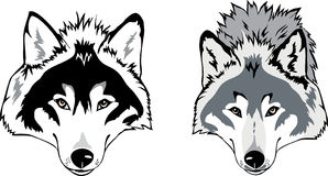 Wolf head vector Royalty Free Stock Images