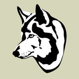 Wolf head vector illustration  style flat Royalty Free Stock Photo