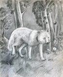 Wolf in het bos - schets Royalty-vrije Stock Foto's