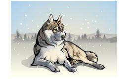Wolf in het hout stock illustratie
